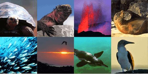 Pedido Islas Encantadas - Galapagos