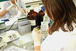 Ensayos de laboratorio / soluciones para el control alimentario