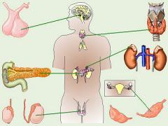 Servicios endocrinologicos