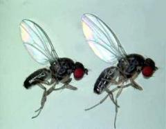 Control de insectos voladores