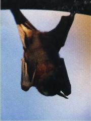 Tratamientos murciélagos