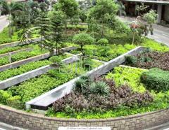 Instalacion de areas verdes